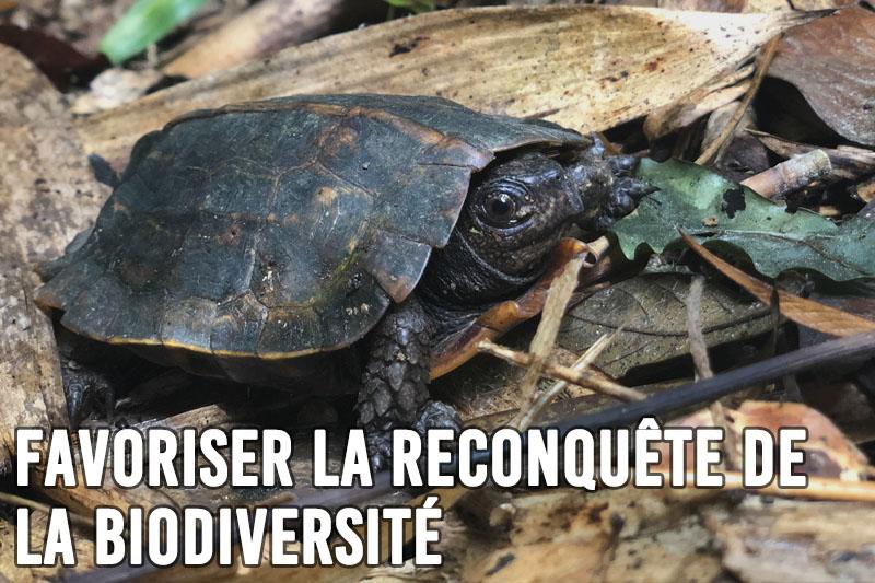 Favoriser la reconquête de la biodiversité