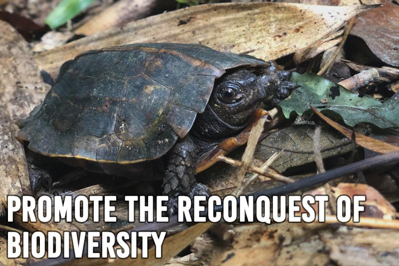 Promote the reconquest of biodiversity